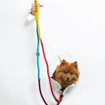 A small dog on a leash