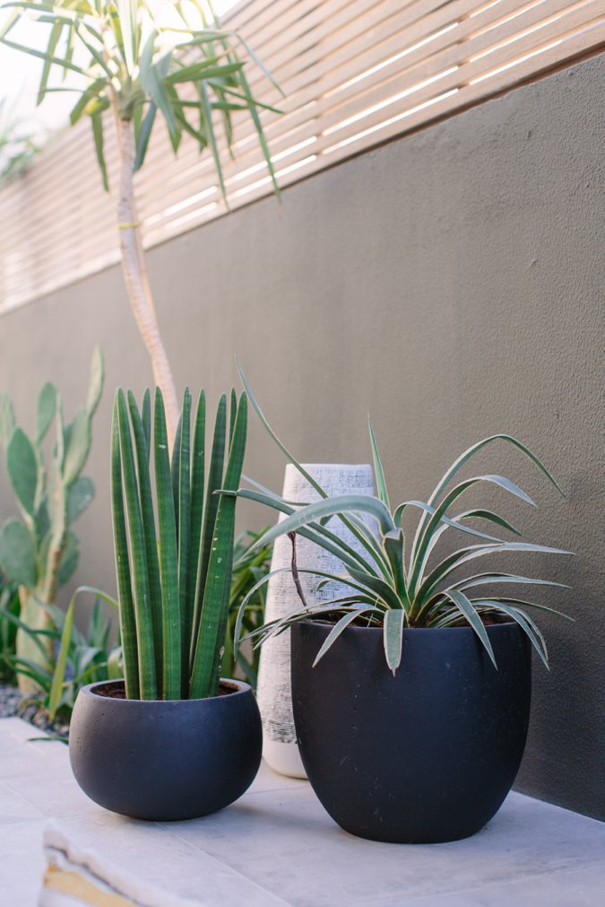 Stylish garden plants