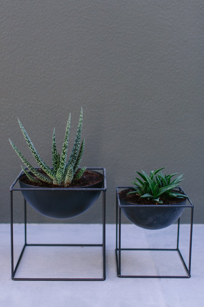 Stylish garden plants in black pots