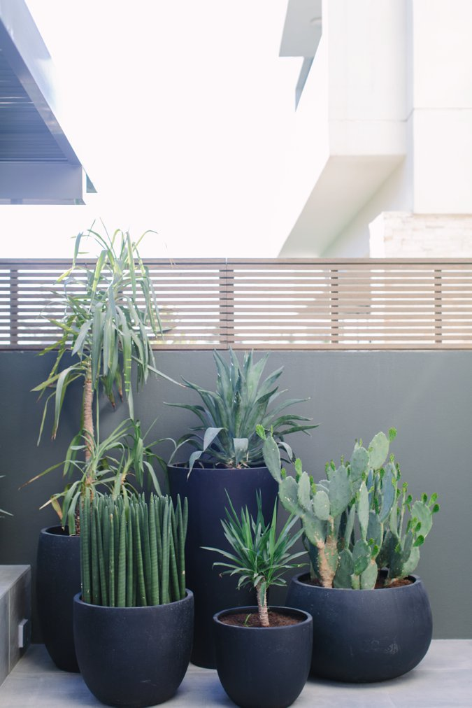 Cluster of stylish cacti and garden plants