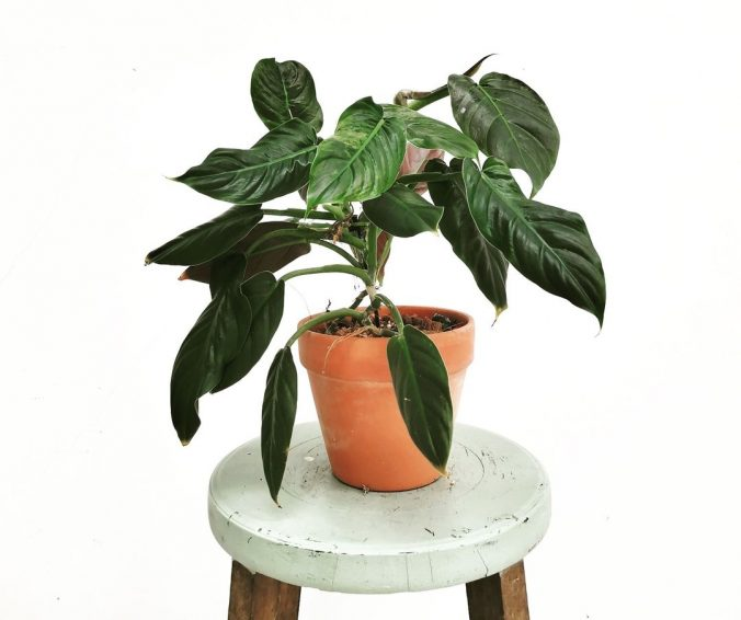 A vase with a flower on a plant